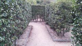 神山森林公園 イルローザの森 生垣迷路内