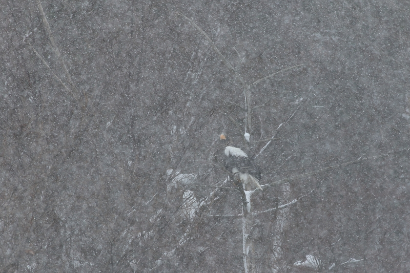 雪景色の女王様