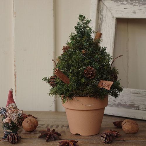 ヒムロスギと木の実のクリスマスツリー