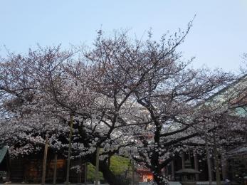 東長寺 (1)