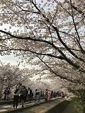 京の春旅2018・蹴上インクライン