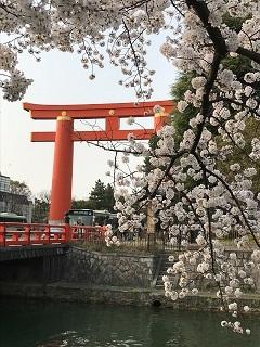 京の春旅2018・平安神宮