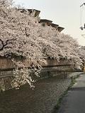 京の春旅2018・白川
