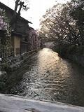 京の春旅2018・祇園白川