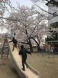 京の春旅2018・仏光寺公園