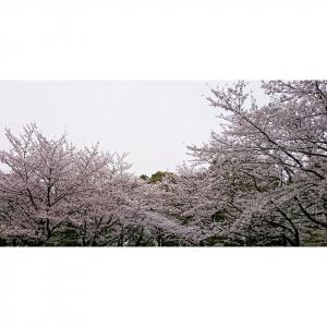桜327の1