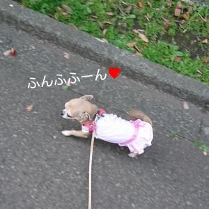 わかば桜6