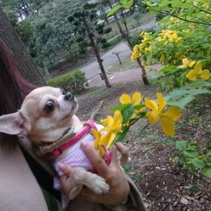 わかば桜7