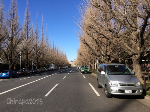 晴天の東京美術館前並木道