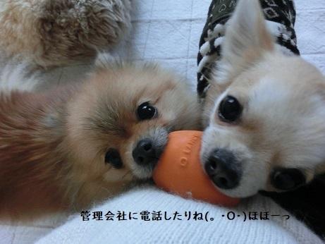 CIMG6482 栗吉&小豆 kotoba