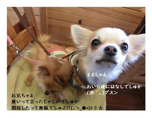 CIMG6517 栗吉&小豆