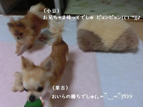 CIMG6628 栗吉&小豆