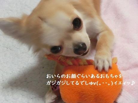 CIMG6601 kurikichi