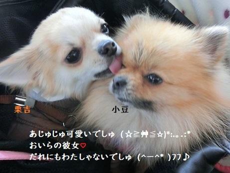 CIMG6631 栗吉&小豆(。・ω・。)ノ♡