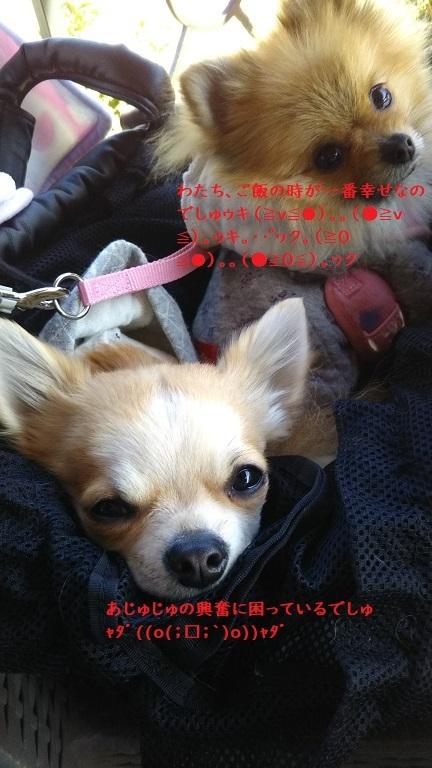 DSC_0094 栗吉&小豆2