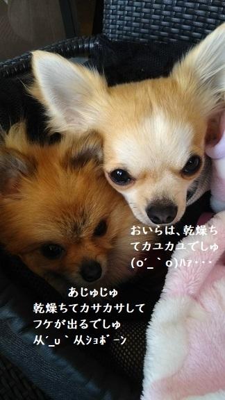 DSC_0103 栗吉&小豆 2