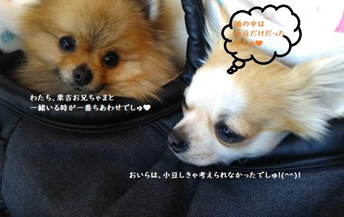 DSC_0193 栗吉&小豆 2