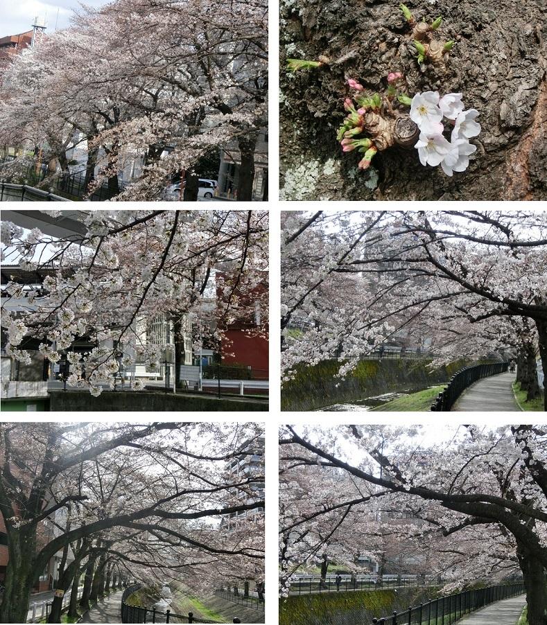 CIMG7259 桜70