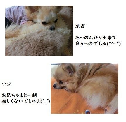 CIMG7228 栗吉    小豆