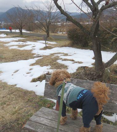 IMG_6423柴犬