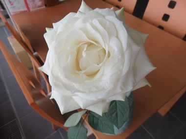 IMG_6385白い薔薇