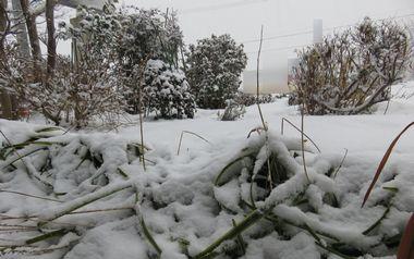 IMG_6480雪