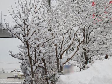 IMG_6497雪