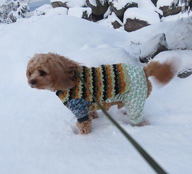 IMG_6484雪