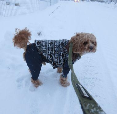 IMG_6527雪道散歩