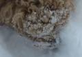 IMG_6781雪まみれ