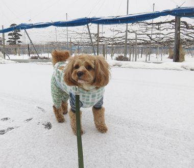 IMG_6915うっすら雪