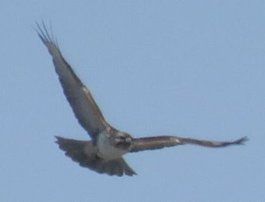 IMG_7205野鳥2
