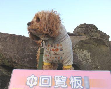 IMG_7214朝散歩