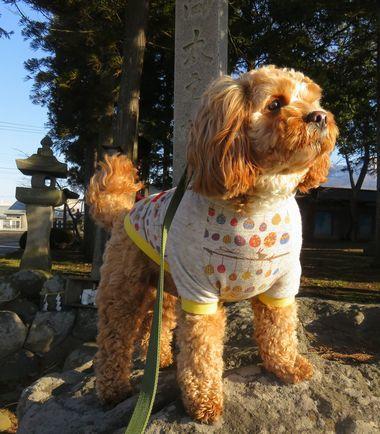 IMG_7378神社岩