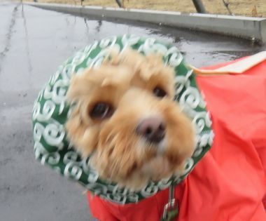 IMG_7526雨散歩