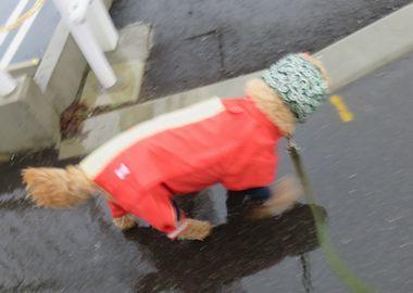 IMG_7529雨散歩