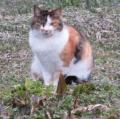 IMG_7880猫