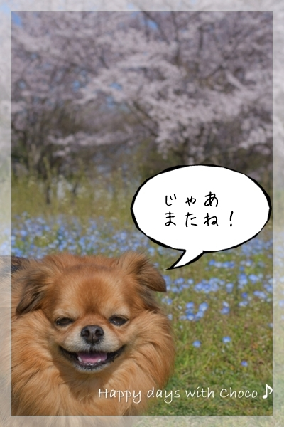 DSC_9560_00001_01.jpg