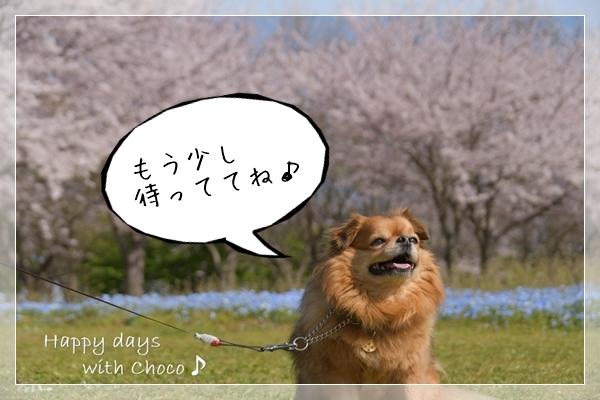 DSC_9615_00001.jpg