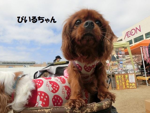 2018 3月4日 箕面バザー 003