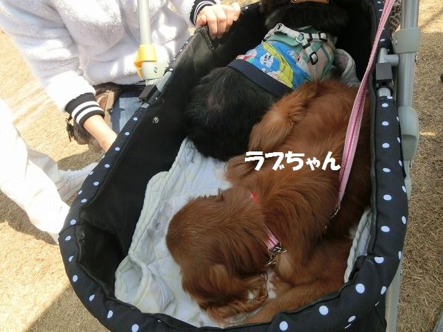 2018 3月4日 箕面バザー 010