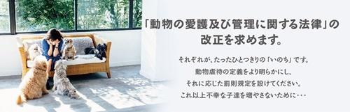 pet_banner[1]