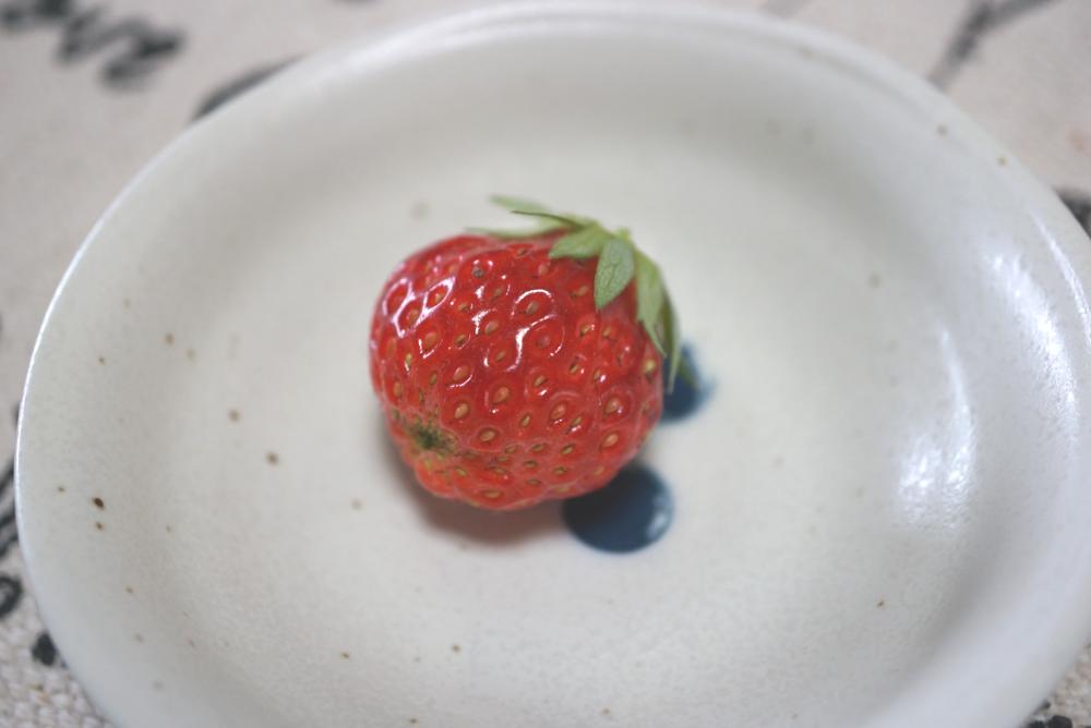 イチゴ収穫後20180402