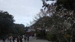 20180210鎌倉歩き13