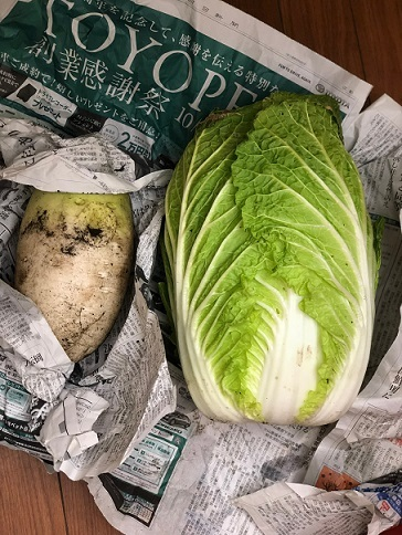 熊本 野菜