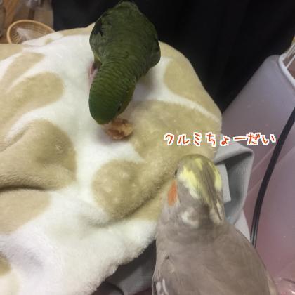 二太2018/03/09-1