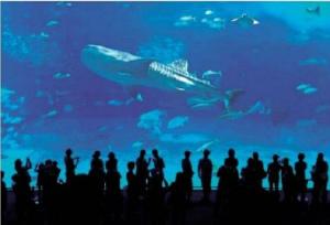 dced68b7349f7500d3c1726023fd13b4沖縄美ら海水族館を県に移管