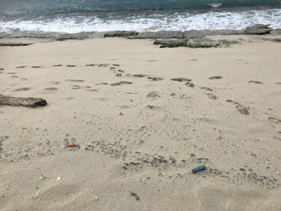 DVaRPLpW0Ao5i11大浜海浜公園に