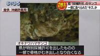18-02-22-05-580x327辺野古 オキナワハマサンゴに一部食害か
