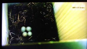 DXv4cFjUMAIoPoh帰還困難区域に巣箱を仕掛け